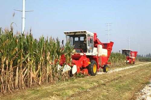 最近三行玉米收割机