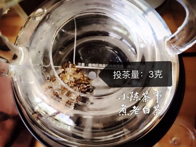 最专业玻璃煮茶器图片