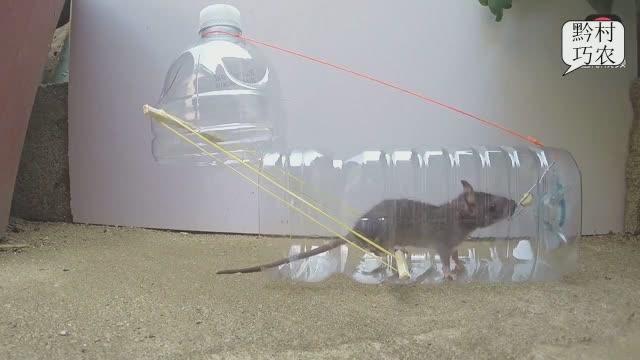小伙将矿泉水瓶做成捕鼠神器,还真好用!