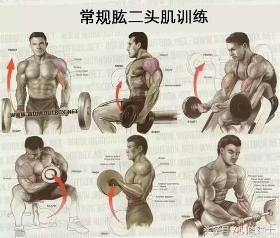 人体肌肉图解,全身各部位肌肉作用和锻炼方法_KeepRun
