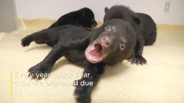 小黑熊表情包动图