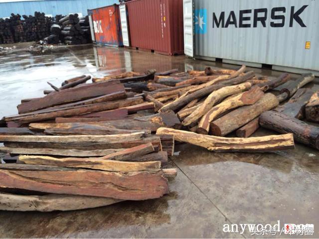 樟子松方木價格