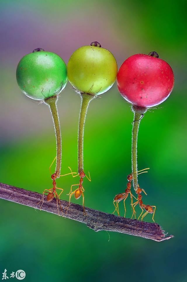 蚂蚁搬东西简笔画可爱