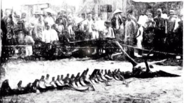 1934年坠龙事件,当事人讲述:龙从天掉落,发出像牛一样的叫声
