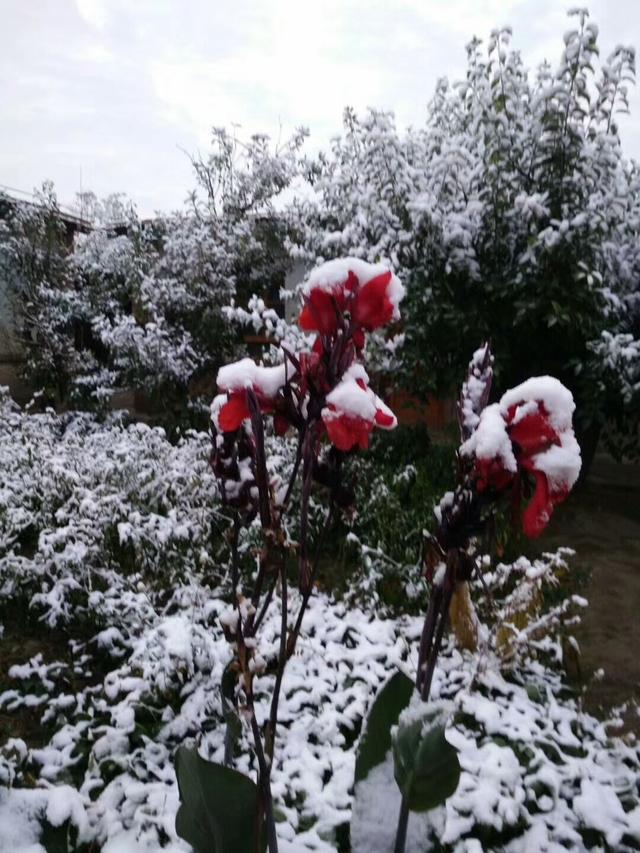 今日小雪,读读古人描写小雪节气的诗句