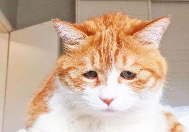 几把猫很担心你表情包