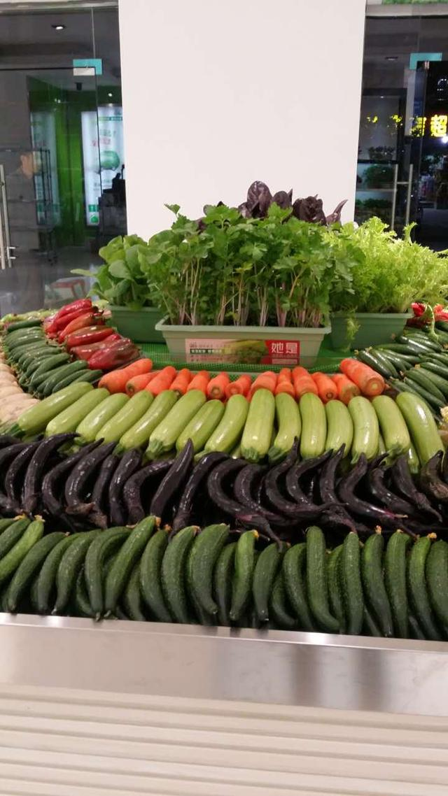 盆栽活体蔬菜,自然之物,农耕温度