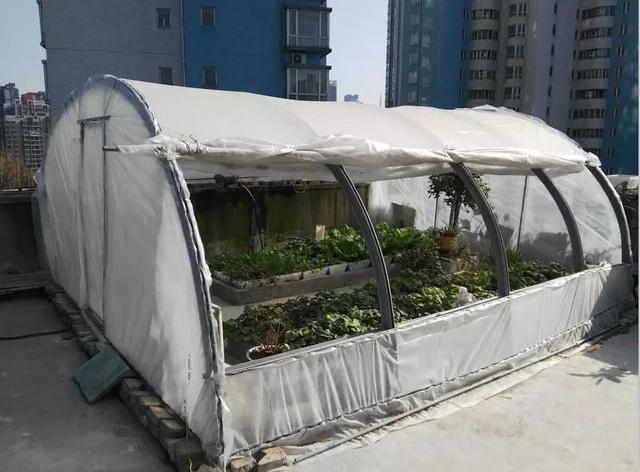 最漂亮的屋頂菜園圖片