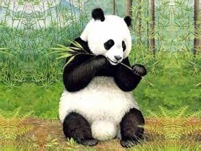 中国四大国宝级动物