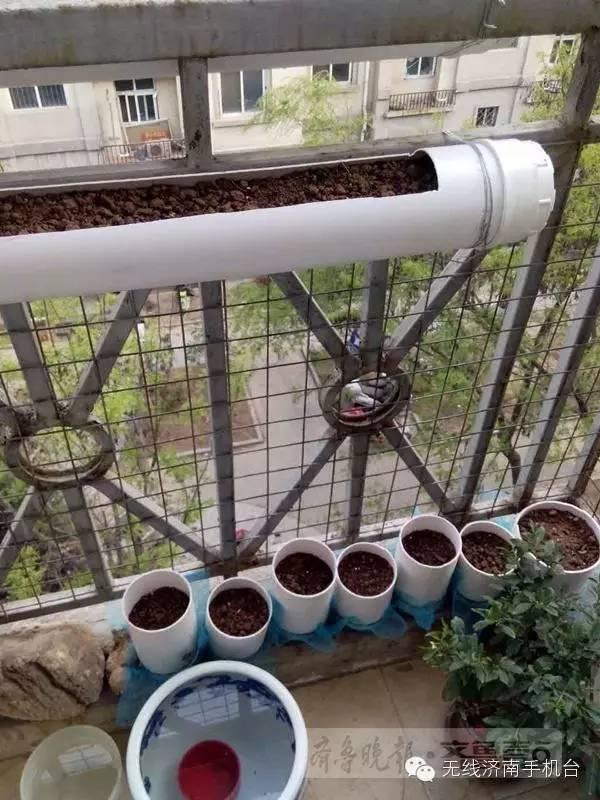 PVC管不仅能种菜,还能种花!