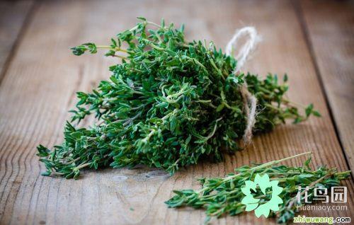 8种常见的草药,可以使任何膳食更美味健康