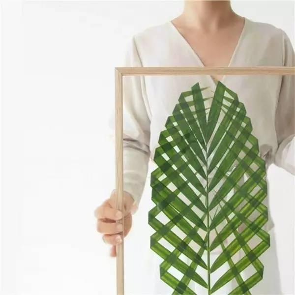 煮一煮就能让树叶变透明?把叶子做成标本美翻了|diy_腾讯网