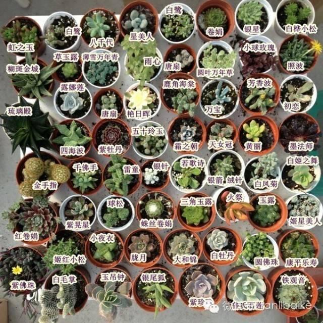 9种多肉植物欣赏,每个多肉其实都有一个美好的故事