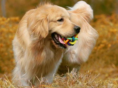 中型宠物犬排名