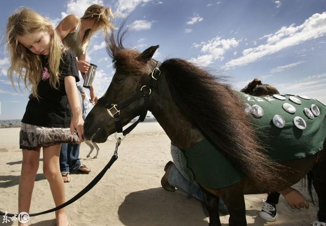 【哪里有卖小矮马的英国矮马多少钱一匹宠物矮马出售... -搜了网