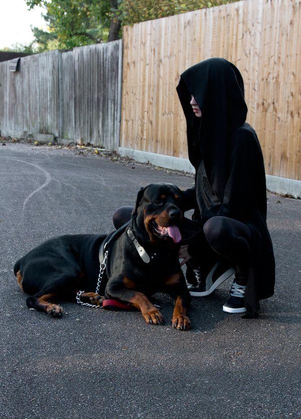 罗威纳犬是否凶猛?德系与美系罗威纳的区别 _狗铺子