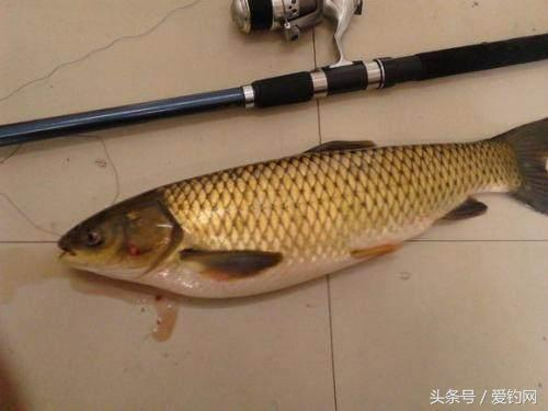 图解夏季民间浮钓草鱼的几种钓法,招招都优秀,钓大草鱼没难度