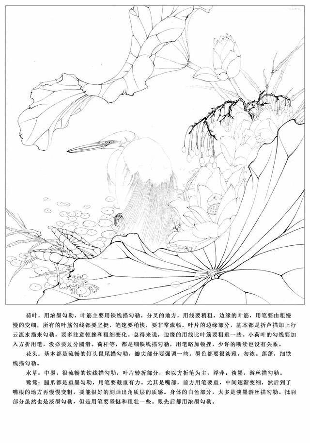 李晓明工笔荷花翠鸟-003_标清
