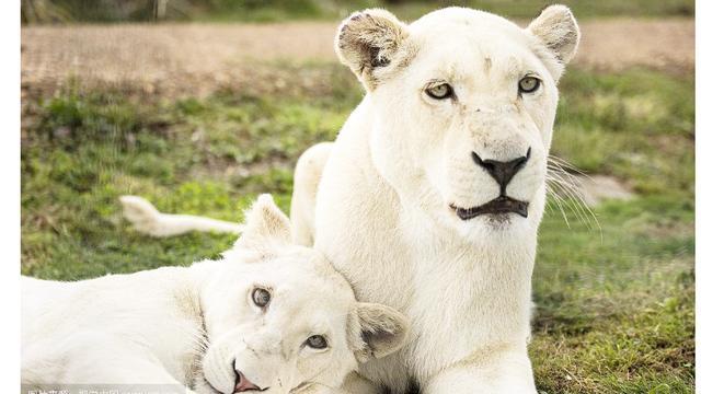 大兴野生动物园票