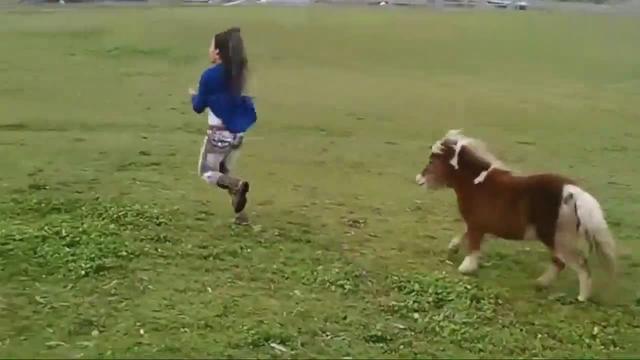 好可爱的矮脚马,你可以领养一匹做宠物了!