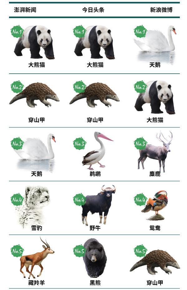 我国四大国宝动物图片
