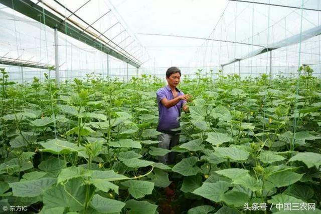 农村地区建蔬菜大棚每亩补贴6000元!