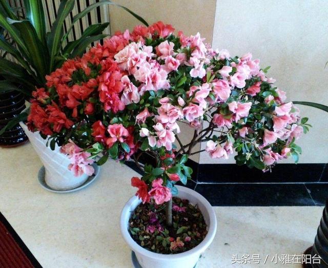 家里最适合养的花图片