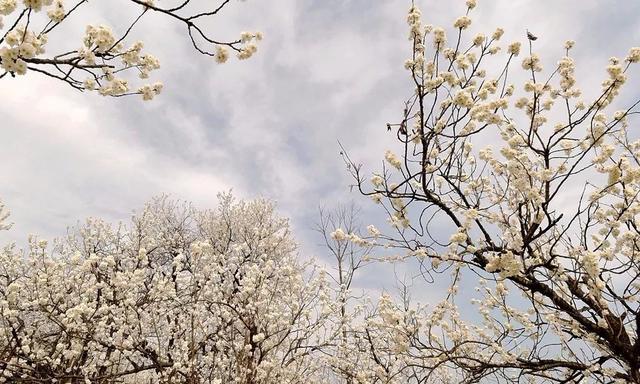 三月三日注音版白居易