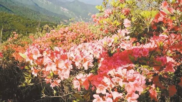 【温州植物批发】_温州植物批发批发_温州植物批发... - 阿里巴巴