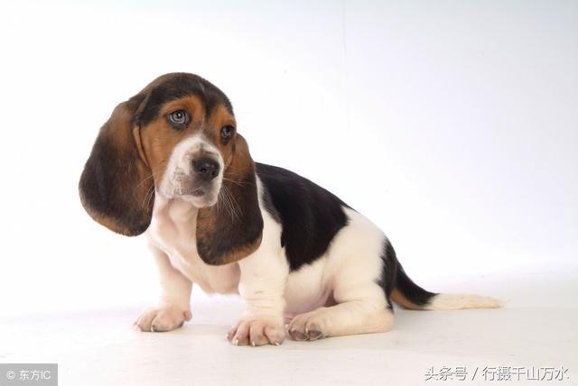 萌狗头像大全可爱 适合用微信头像的狗狗图片_微信头像_找个性网