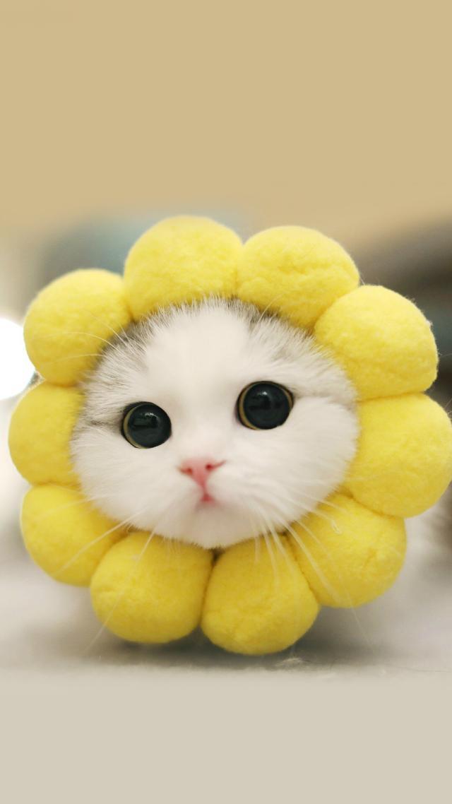 小猫图片大全可爱