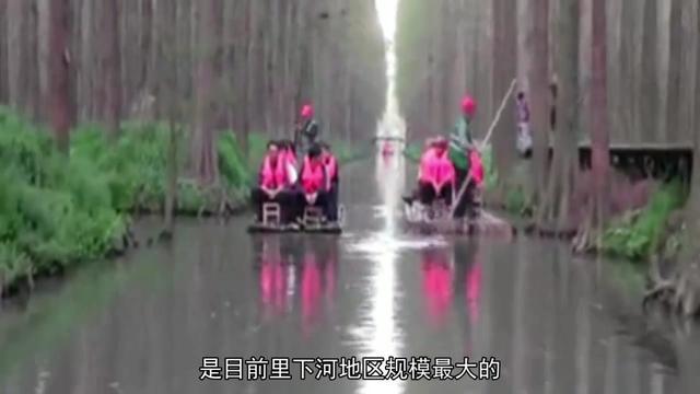 兴化(2)-李忠水上森林公园_5号院的美好生活_新浪博客