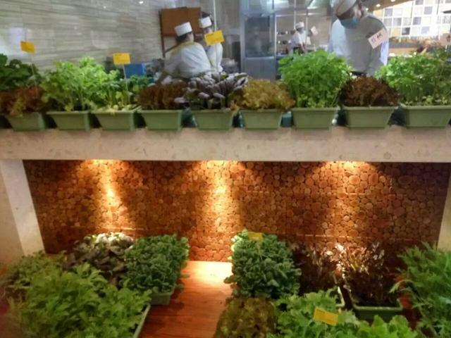 杭州又出现一家盆栽蔬菜活体超市,市区采摘,谁说农产品没创意