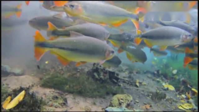 【图】大鱼吃小鱼(两幅)_风光摄影_蜂鸟论坛-蜂鸟网