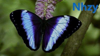 蝴蝶的身体构造是怎样的?蝴蝶的身体构造是怎 – 手机爱问