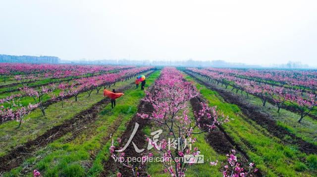 """泗洪:大学生村官争当富民""""领头雁"""""""