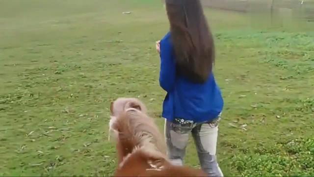 国外美女养的袖珍宠物马,跟小矮马一起赛跑,好欢快的样子