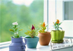 家中养花风水禁忌有哪些?