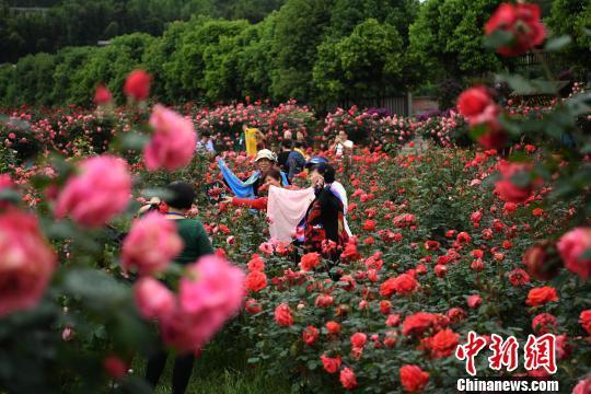 白玫瑰花图片大全大图