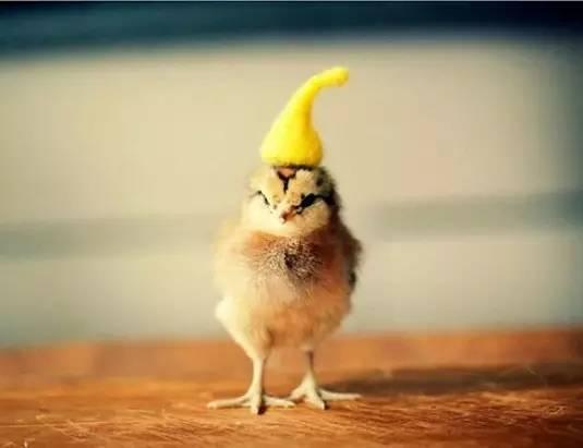 小鸡头饰手工制作帽子