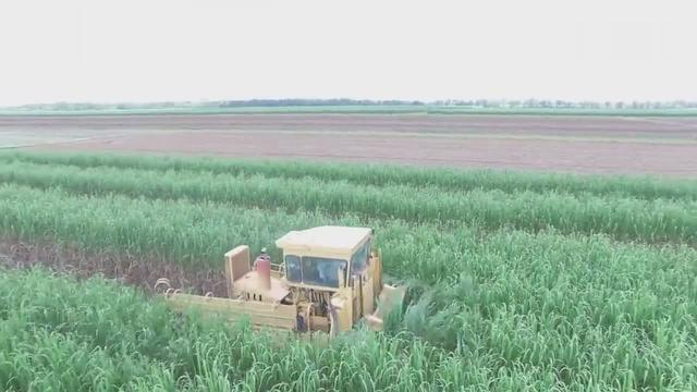 机械臂装载甘蔗,收割机自动化收割甘蔗