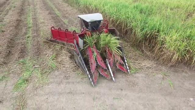 甘蔗收割机,要甘蔗丛中开出一条路来,这操作看着真过瘾