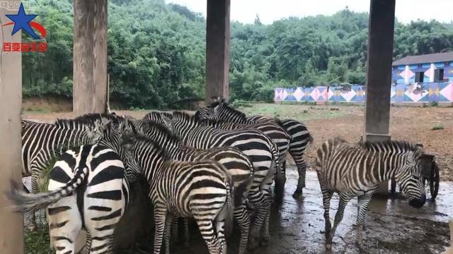 杭州野生动物园自驾