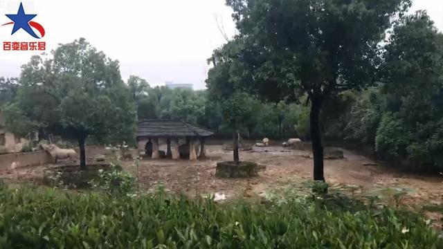 杭州有野生动物园吗