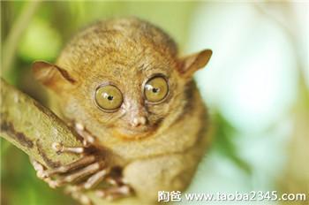 世界上最奇怪的10个生物,你认识哪一个?-国际频道-东北网手机版