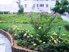 私家屋頂菜園