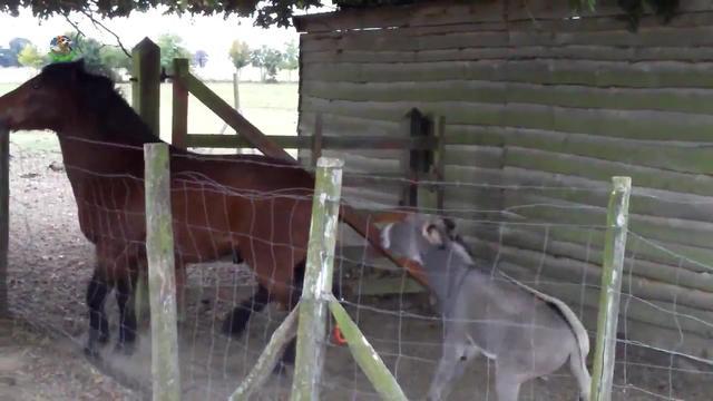 一匹马和一只羊的图片