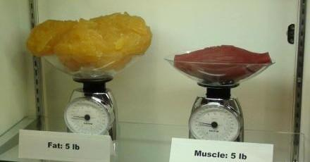 一斤肌肉和一斤脂肪