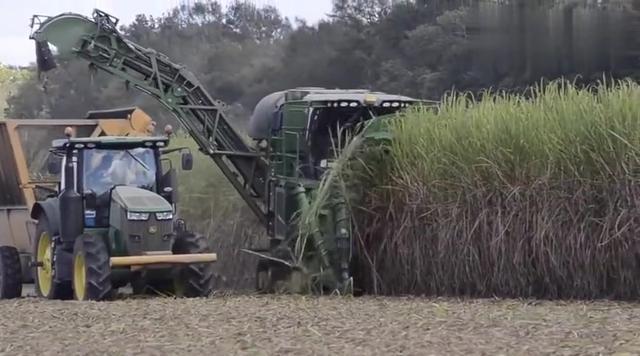 实拍大型机械收割甘蔗过程