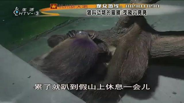 杭州野生动物园游玩